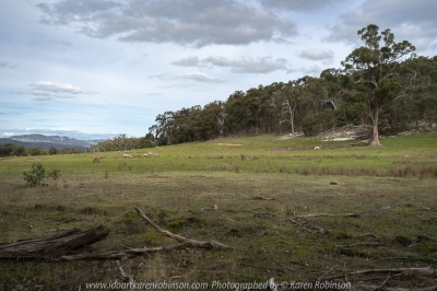 Nulla Vale, Victoria - Australia 'Large Boulder Region' Photographed by Karen Robinson September 2018 NB. All images are protected by copyright laws. Comments - A lovely spring day drive in the countryside with hubby.
