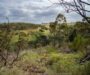 Bulla, Victoria - Australia 'Organ Pipes National Park' Photographed by Karen Robinson November 2018 Comments - Overcast with a pleasant bush walking temperature, the National Park provided hubby and I with beautiful nature scenic landscape views and a varying number of birds to photograph. Photograph featuring views while walking along track in National Park.
