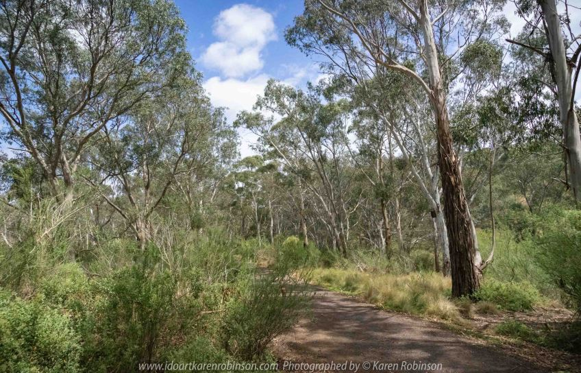 Bulla, Victoria - Australia 'Organ Pipes National Park' Photographed by Karen Robinson November 2018 Comments - Overcast with a pleasant bush walking temperature, the National Park provided hubby and I with beautiful nature scenic landscape views and a varying number of birds to photograph. Photograph featuring National Park Bush Track.