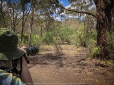 Bulla, Victoria - Australia 'Organ Pipes National Park' Photographed by Karen Robinson November 2018 Comments - Overcast with a pleasant bush walking temperature, the National Park provided hubby and I with beautiful nature scenic landscape views and a varying number of birds to photograph. Photograph featuring Karen Robinson Photographer.