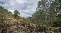 Bulla, Victoria - Australia 'Organ Pipes National Park' Photographed by Karen Robinson November 2018 Comments - Overcast with a pleasant bush walking temperature, the National Park provided hubby and I with beautiful nature scenic landscape views and a varying number of birds to photograph. Photograph featuring Tesselated Pavement.