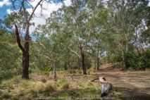 Bulla, Victoria - Australia 'Organ Pipes National Park' Photographed by Karen Robinson November 2018 Comments - Overcast with a pleasant bush walking temperature, the National Park provided hubby and I with beautiful nature scenic landscape views and a varying number of birds to photograph. Photograph featuring National Park Bush.