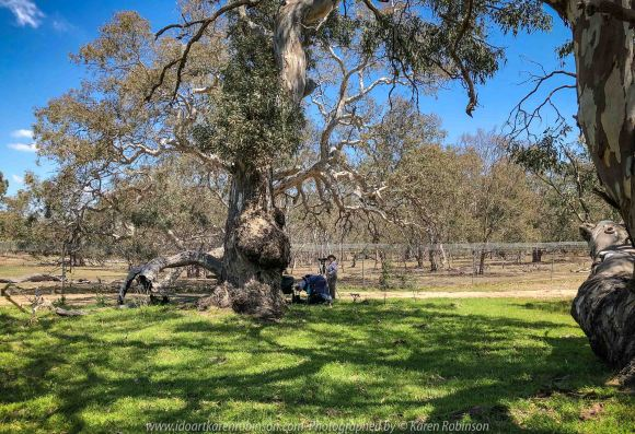 Greenvale, Victoria - Australia 'Day Trip at Woodlands Historic Park' Photographs from Karen Robinson November 2018 Comments - A photography adventure with daughter Kelly, her daughter baby Maddie (our grand daugher) and hubby Mark.