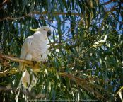 Seymour, Victoria - Australia 'Mark's 66th Birthday - Goulburn River near Caravan Park' Photographed by Karen Robinson November 2018 Comments - Day out with daughter Kelly, son-in-law Matt, grand daughter Maddie, hubby Mark and Karen fishing for Mark's Birthday. Photograph featuring Sulphur Crested Cockatoo perched high up on a Gum tree branch.