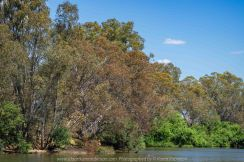 Seymour, Victoria - Australia 'Mark's 66th Birthday - Goulburn River near Caravan Park' Photographed by Karen Robinson November 2018 Comments - Day out with daughter Kelly, son-in-law Matt, grand daughter Maddie, hubby Mark and Karen fishing for Mark's Birthday.