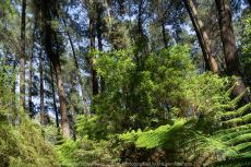 East Warburton, Victoria - Australia 'Redwood Forest and Cement Creek East Branch' Photographed by Karen Robinson December 2018 Comments: Wonderful stroll through the forest with a bonus finding the creek surrounded by lush green vegetation.