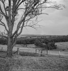 Bruthen, Victoria - Australia 'Wards Road Region' Photographed by Karen Robinson December 2018 Comments - Early morning drive along Wards Road, a back road that winds through beautiful local farming properties. Photograph transformed into a black and white.