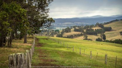 Bruthen, Victoria - Australia 'Wards Road Region' Photographed by Karen Robinson December 2018 Comments - Early morning drive along Wards Road, a back road that winds through beautiful local farming properties.