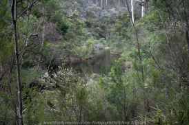 Deptford, Victoria - Australia 'Nicholson River Bush Walk' Photographed by Karen Robinson December 2018 Comments - Hubby, his brother and I took a bush walk alongside of the Nicholson River visiting historic landmarks on our way through Australian bush. Photograph featuring Nicholson River View.