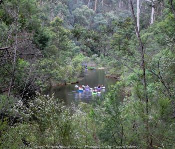 Deptford, Victoria - Australia 'Nicholson River Bush Walk' Photographed by Karen Robinson December 2018 Comments - Hubby, his brother and I took a bush walk alongside of the Nicholson River visiting historic landmarks on our way through Australian bush. Photograph featuring Nicholson River View and holiday makers canoeing.
