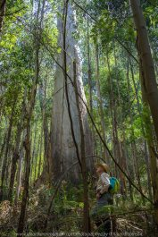Kinglake, Victoria - Australia 'Jehosaphat Gully Walking Track in Kinglake National Park' Photographed by Karen Robinson February 2019 Comments - Hubby and I visiting the newly restored track upon its reopening after it was destroyed by Victoria's Black Saturday bushfires in 2009. Photograph featuring Karen Robinson's hubby.