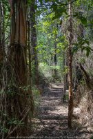 Kinglake, Victoria - Australia 'Jehosaphat Gully Walking Track in Kinglake National Park' Photographed by Karen Robinson February 2019 Comments - Hubby and I visiting the newly restored track upon its reopening after it was destroyed by Victoria's Black Saturday bushfires in 2009.
