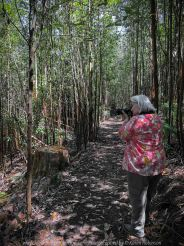 Kinglake, Victoria - Australia 'Jehosaphat Gully Walking Track in Kinglake National Park' Photographed by Karen Robinson February 2019 Comments - Hubby and I visiting the newly restored track upon its reopening after it was destroyed by Victoria's Black Saturday bushfires in 2009. Photograph featuring Karen Robinson Photographer.