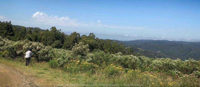 Mount Tassie, Victoria - Australia 'Panoramic Views' Photographed by Karen Robinson December 2018 Comments - Glorious expansive views. Photograph featuring Karen Robinson Photographer