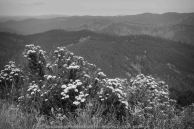 Mount Tassie, Victoria - Australia 'Panoramic Views' Photographed by Karen Robinson December 2018 Comments - Glorious expansive views.