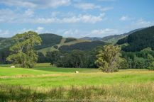 Tarra Valley, Victoria - Australia 'Tarra Valley Road' Photographed by Karen Robinson December 2018 Comments - A magnificent part of Victoria travelling along this road through beautiful scenic farming properties and then alongside of the Tarra River where lush vegetation and the tallest of tress can be found. Stunning scenic drive - just breathtaking!