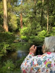 Tarra Valley, Victoria - Australia 'Tarra Valley Road' Photographed by Karen Robinson December 2018 Comments - A magnificent part of Victoria travelling along this road through beautiful scenic farming properties and then alongside of the Tarra River where lush vegetation and the tallest of tress can be found. Stunning scenic drive - just breathtaking! Photograph featuring Karen Robinson Photographer.