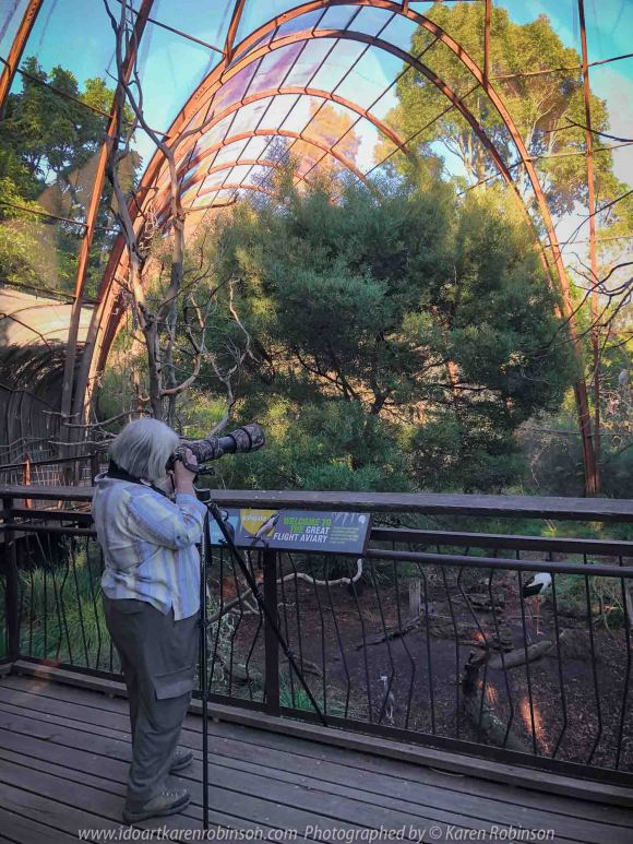 Parkville, Victoria - Australia 'Melbourne Zoo Trip 8' Photographed by Karen Robinson March 2019 Comments - This time it was about photographing Birds within the Walk-through Aviary. Photograph featuring Karen Robinson Photographer.