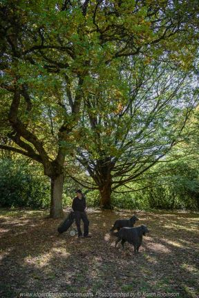 Mount Macedon, Victoria - Australia 'Duneira Heritage Garden' Photographed by Karen Robinson April 2019 Comments - A beautiful Autumn day with hubby at these magnificent gardens where tall trees are the dominating feature. Photograph featuring old Oak Tree with hubby standing next to two dog statues.