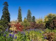 Mount Macedon, Victoria - Australia 'Duneira Heritage Garden' Photographed by Karen Robinson April 2019 Comments - A beautiful Autumn day with hubby at these magnificent gardens where tall trees are the dominating feature.