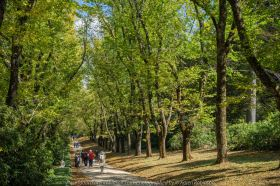 Mount Macedon, Victoria - Australia 'Duneira Heritage Garden' Photographed by Karen Robinson April 2019 Comments - A beautiful Autumn day with hubby at these magnificent gardens where tall trees are the dominating feature. Photograph featuring stately English Oak Avenue.