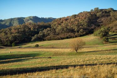 Australia 'Autumn Drive' Photographed by Karen Robinson May 2019 Comments: Early morning photography adventure to this region and finding beautiful morning sunrise panoramic views.