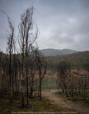 Eildon, Victoria - Australia 'Jerusalem Creek and Lake Eildon Region' Photographed by Karen Robinson July 2019 Comments: Rainy winter morning photographing Lake Eildon Region. Photograph featuring Jerusalem Creek area of Lake Eildon Region.
