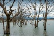 Bonnie Doon, Victoria - Australia 'Lake Eildon Region' Photographed by Karen Robinson July 2019 Comments: Lakeside views across Lake Eildon