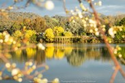 Eildon, Victoria - Australia 'Goulburn River View' Photographed from Karen Robinson August 2019 Comments - Beautiful views of the Goulburn River with reflections of bright yellow wattle trees on the river's surface.