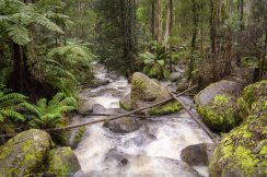 Toorongo, Victoria - Australia 'Toorong Falls Reserve' Photographed by Karen Robinson August 2019 Comments - Cold early morning winter's day to see the Toorongo and Amphitheatre waterfalls at their best due to heavy rains and snowfalls days before and overnight.