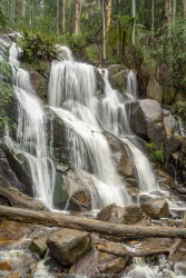 Toorongo, Victoria - Australia 'Toorong Falls Reserve' Photographed by Karen Robinson August 2019 Comments - Cold early morning winter's day to see the Toorongo and Amphitheatre waterfalls at their best due to heavy rains and snowfalls days before and overnight. Photograph featuring Toorongo Falls.