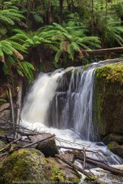 Toorongo, Victoria - Australia 'Toorong Falls Reserve' Photographed by Karen Robinson August 2019 Comments - Cold early morning winter's day to see the Toorongo and Amphitheatre waterfalls at their best due to heavy rains and snowfalls days before and overnight. Photograph featuring Amphitheatre Falls.