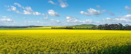 Wallan, Victoria - Australia 'Canola Fields' Photographed by Karen Robinson September 2019 Comments - Glorious fields of yellow.