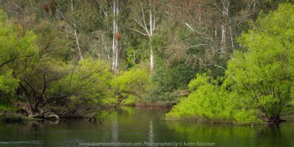 Acheron, Victoria - Australia 'Goulburn River' Photographed by Karen Robinson October 2019 Comments - A day out so hubby could get some fishing in while I took some photographs around the river.