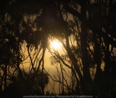 Penshurst, Victoria - Australia 'Lookout at Mount Rouse' Photographed by Karen Robinson November 2019 Comments - Cold, rainy, cloudy early morning photographing the sunrise at the top of Mount Rouse.