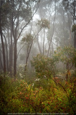 Grampians National Park, Victoria - Australia 'Region' Photographed by Karen Robinson November 2019 Comments: Featuring photographs within Zumsteins just off Mt. Victory Road.