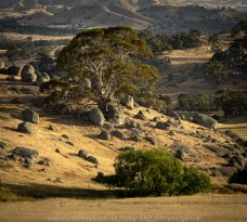 High Camp, Victoria - Australia 'Granite Boulder Region' Photographed by Karen Robinson December 2019 Comments: Beautiful early morning around sunrise in an area that features many giant granite boulders.
