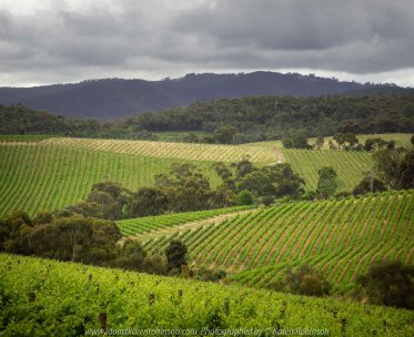 Saint Andrews, Victoria - Australia 'Vineyards along Buttermans Track' Photographed by Karen Robinson November 2019 Comments: Discovered these wonderful hillsides of vineyards, lush green with distance mountain range and grey looming clouds above!