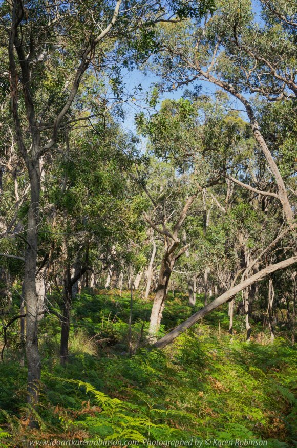 Warrak, Victoria - Australia 'Langi Ghiran State Park Region' Photographed by Karen Robinson November 2019 Comment - Easter Creek Track around Langi Ghiran Reservoir Region.