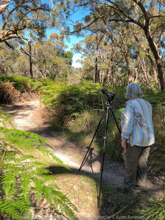 Warrak, Victoria - Australia 'Langi Ghiran State Park Region' Photographed by Karen Robinson November 2019 Comment - Easter Creek Track around Langi Ghiran Reservoir Region.. Photograph featuring Karen Robinson