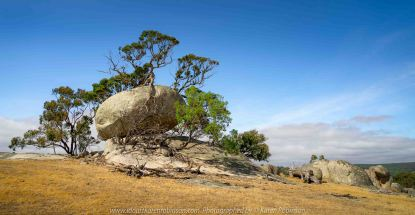 Nulla Vale, Victoria - Australia 'Lancefield-Pylong Road Granite Boulders' Photographed by Karen Robinson January 2020 Comments - Australian Gums Trees growing around and upon huge granite boulders.