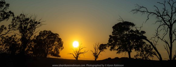Elphinstone, Victoria - Australia 'Sunrise' Photographed by Karen Robinson March 2020 Comments - Beautiful early morning photographing the sunrise across a field featuring silhouetted trees.