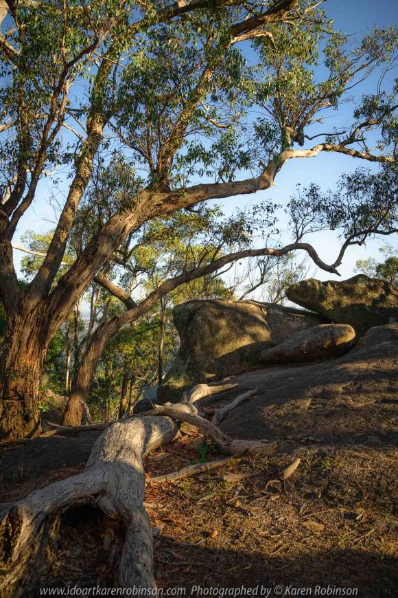 Harcourt, Victoria - Australia 'Dog Rocks' Photographed by Karen Robinson March 2020 Comments: Morning at Dog Rocks photographing large granite boulders and gum trees during the first days of Autumn.