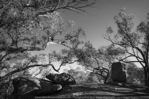 Harcourt, Victoria - Australia 'Dog Rocks' Photographed by Karen Robinson March 2020 Comments: Morning at Dog Rocks photographing large granite boulders and gum trees during the first days of Autumn. The scene's lighting at this location looked best as a black and white image.