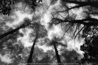 Mount Macedon, Victoria - Australia 'Sanatorium Lake Area' Photographed by Karen Robinson March 2020. Comments: A drive through Mount Macedon Regional Park around the Sanatorium Lake area revealed beautiful parts where trees stood tall amongst soft morning mountain mist.