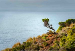 Ventnor, Victoria - Australia 'Pyramid Rock Lookout' Photographed by Karen Robinson February 2020 Comments: Beautiful coastal views from Pyramid Rock Location.