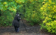Harcourt, Victoria - Australia 'The Oak Forest in Autumn' Photographed by Karen Robinson April 2020. Comments: Lush green and autumn coloured leaves are a stand out amongst the oak forest. Photograph featuring Karen Robinson taking photos.