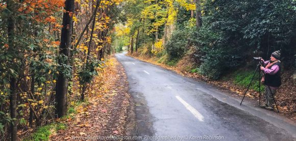 Mount Macedon, Victoria - Australia 'Alton Road in Autumn' Photographed by Karen Robinson May 2020 Comments: The last of autumn leaves on trees lining Alton Road.
