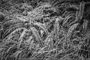 Rubicon, Victoria - Australia 'Blue Range Road Region' Photographed by Karen Robinson June 2020 Comments - Beautiful winter's day drive along Blue Range Road revealed a small rainforest and patches of heavily frosted vegetation. Photograph featuring frosted covered vegetation near a small creek.