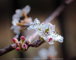 Beveridge, Victoria - Australia 'Flowers/Plants Home Garden' Photographed by Karen Robinson August 2020 Comments: Macro Photography